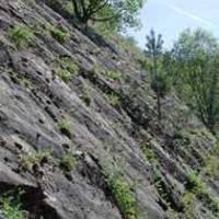 Das Foto (J. Rö.) zeigt die Oberfläche eines versteinerten Meeresbodens in Sibbesse, der vor ca. 200 Mio. Jahren gebildet wurde, und zahlreiche Fossilien enthält.
